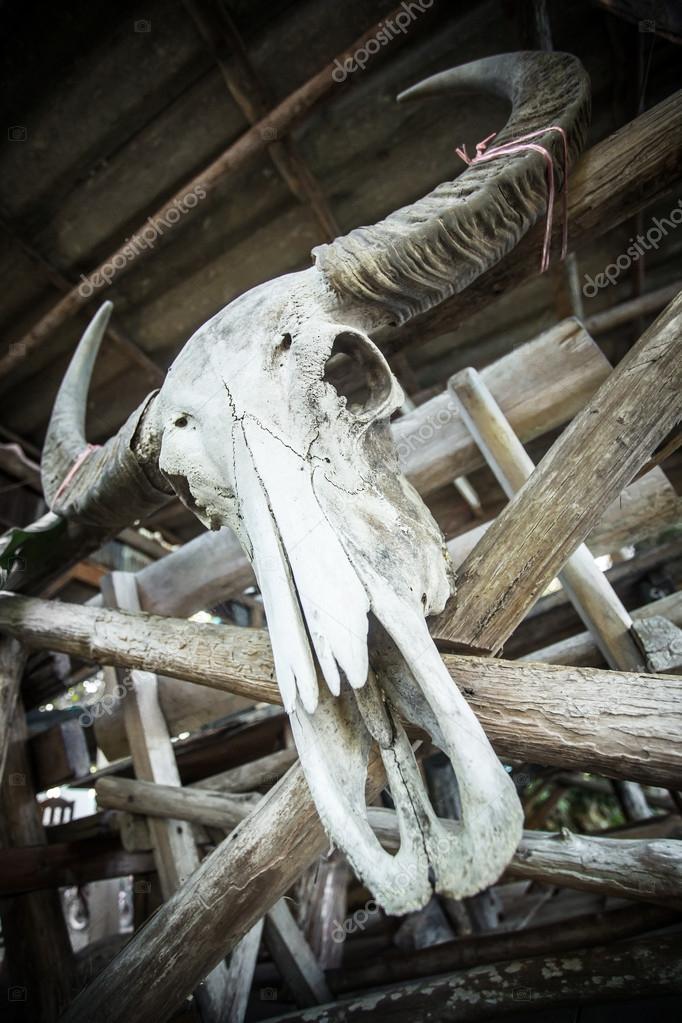cráneo de un búfalo de agua — Foto de stock © mazzzur #62672789