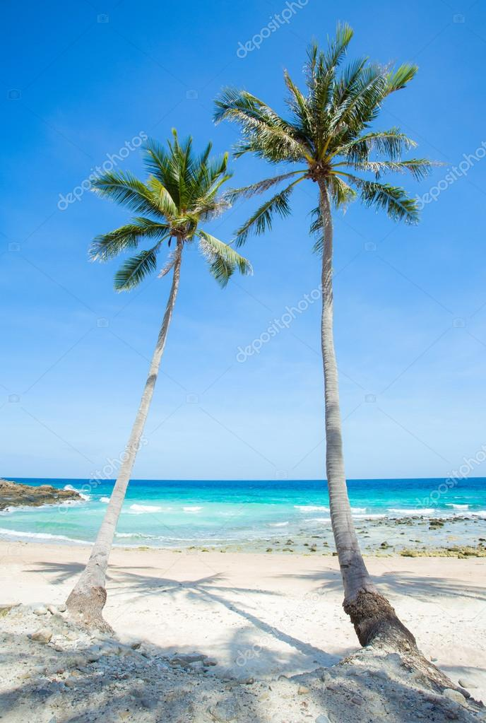 Palm trees over beautiful tropical beach