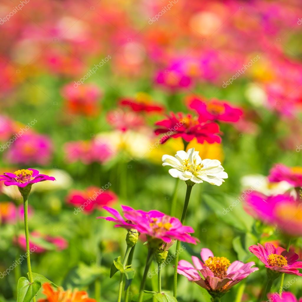 prato di fiori colorati — Foto Stock © mazzzur #70291891