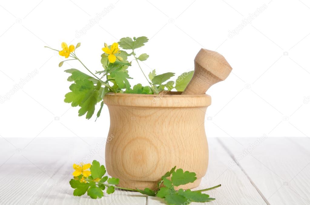 Fresh celandine in wooden mortar on white wooden table