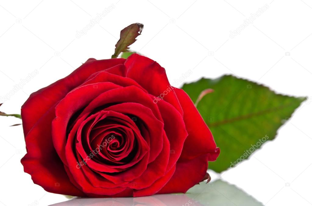 saint rose single parents Also called: saint valentine's day or the feast of saint valentine: observed by: people in many countries anglican communion (see calendar) lutheran church (see calendar): type: christian, cultural, commercial: significance.