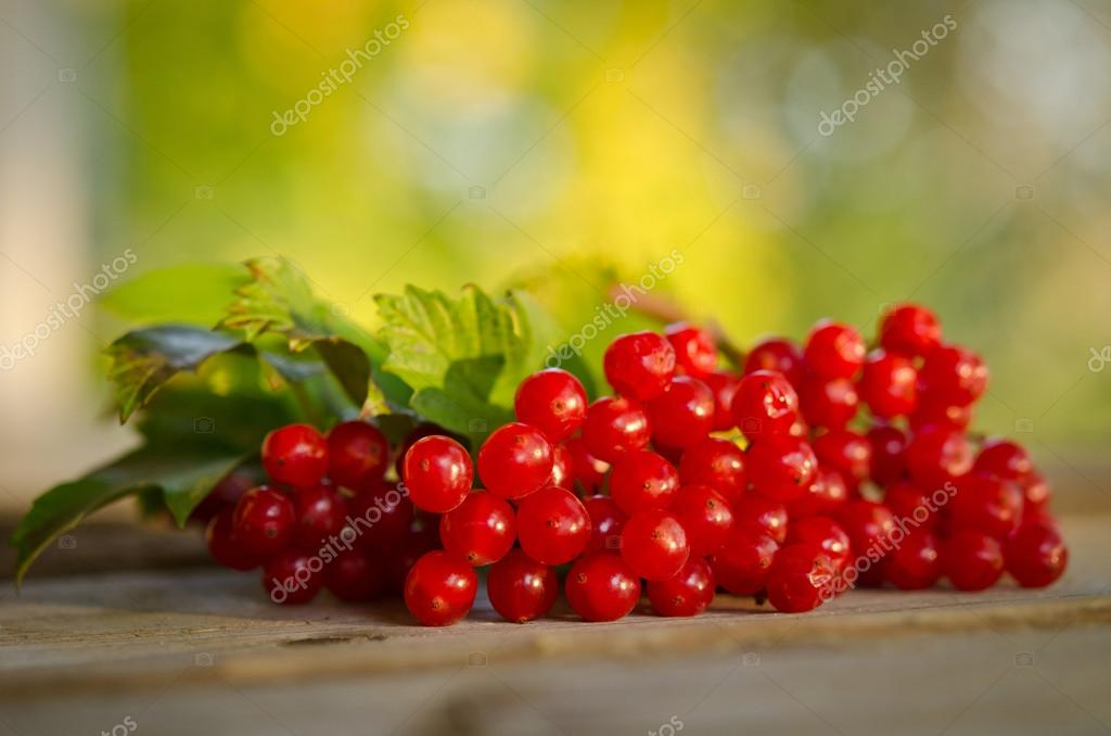Red Viburnum berries on wooden table