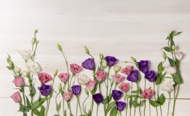 Colorful eustoma flowers on white wooden background and free space for text at the top stock vector