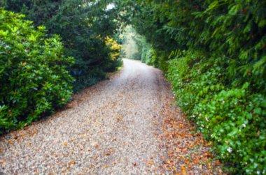 Road through park
