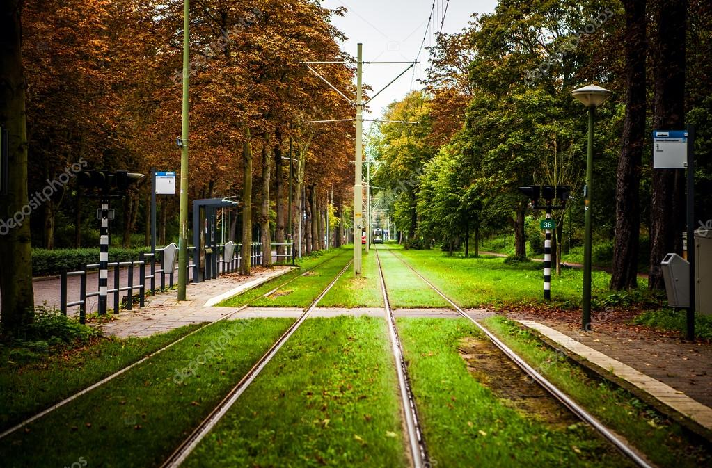 Tram rails in the park