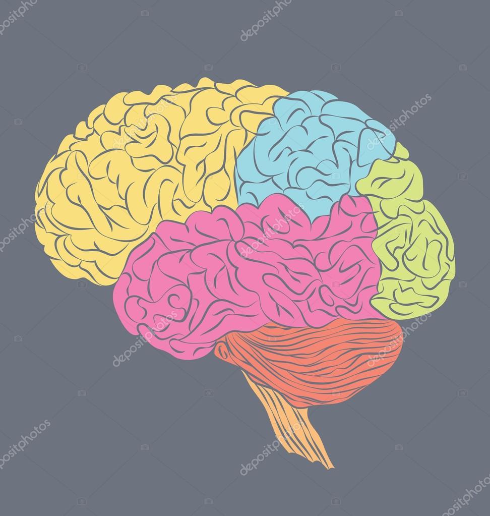 Partes del cerebro humano — Archivo Imágenes Vectoriales ...