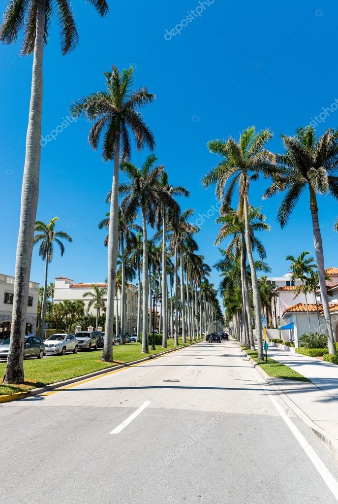Tropical landscape of Florida, USA