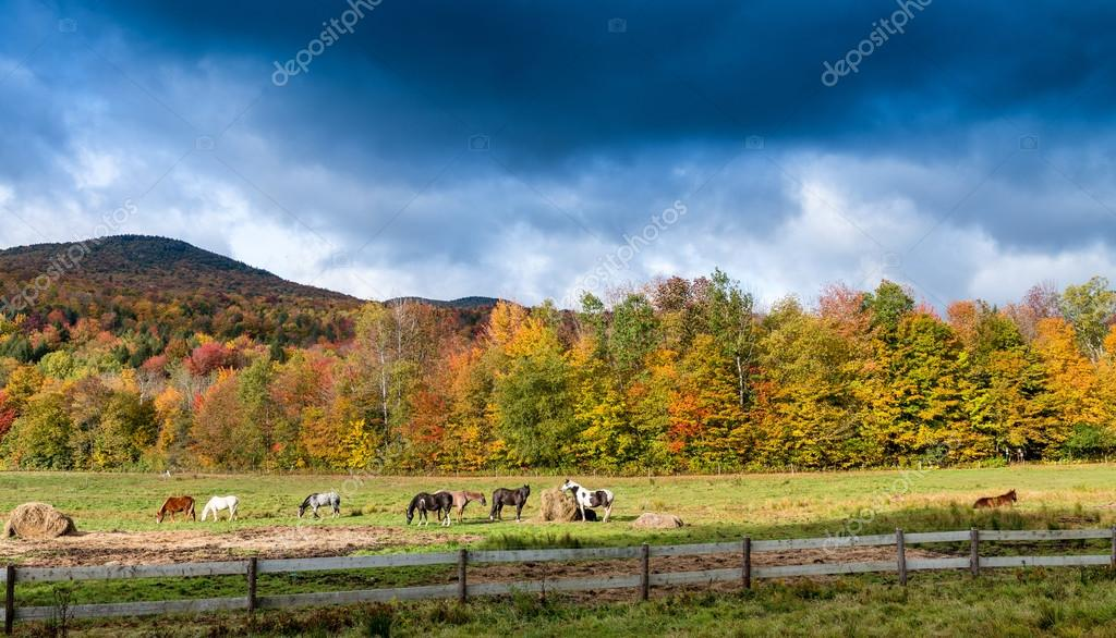 Horses grazing on a foliage environment