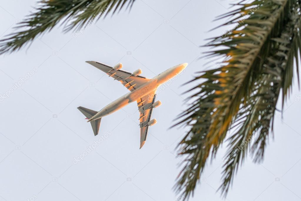 Airplane framed by palm trees — Stock Photo © jovannig #124060968