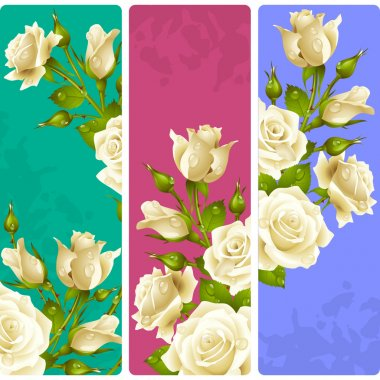 White Rose frames. Vector set of floral vertical banners