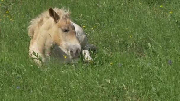 Free colt videos