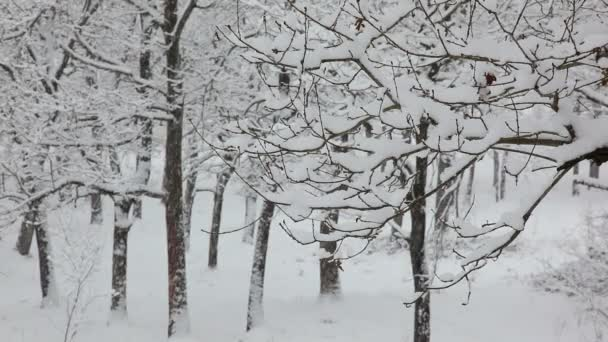 Sníh v zimě dřevo