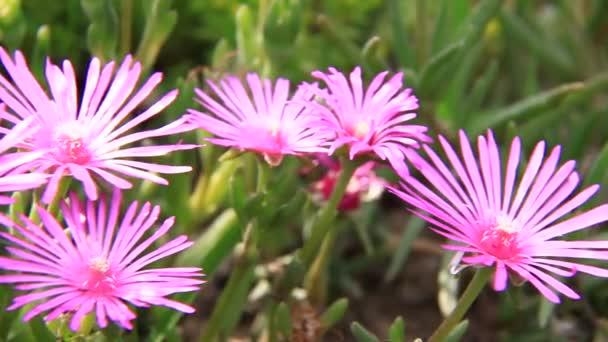 rózsaszín virágok, zöld mezőn