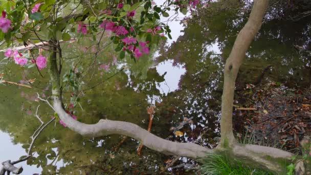 odraz barevné červenými květy v rybníku