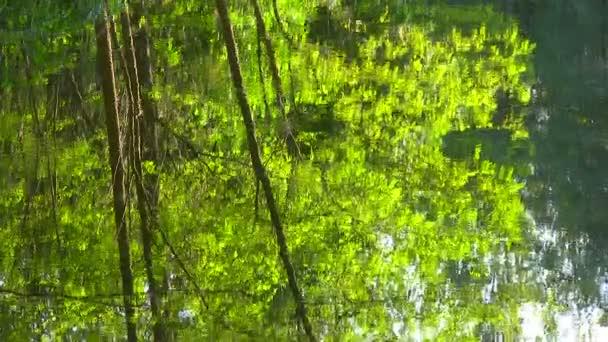 Torrente tranquillo in un bosco