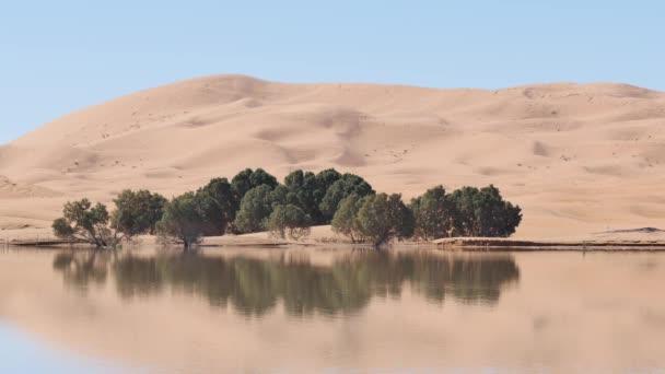 Vegetace v pouštním jezeře