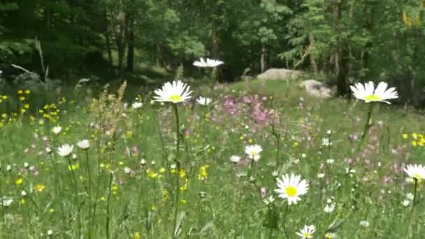 Mountain meadow full of flowers