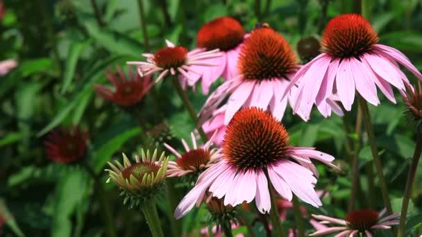 Rózsaszín virágok a méhek