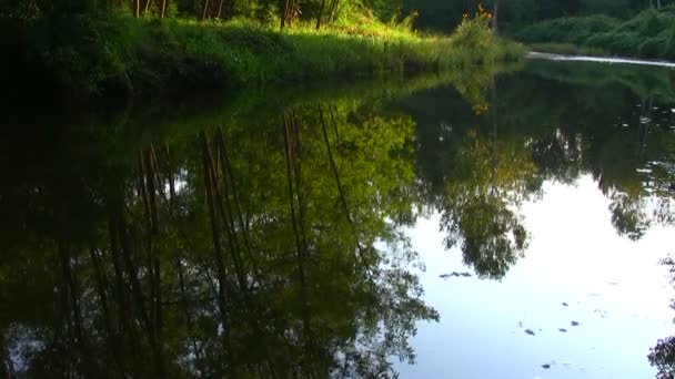 Flusso tranquillo nei boschi