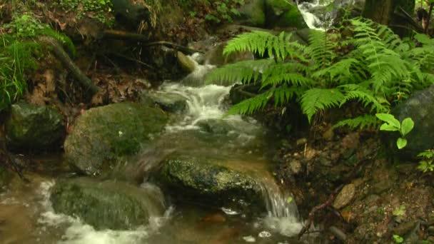 Mall vodopád v lese