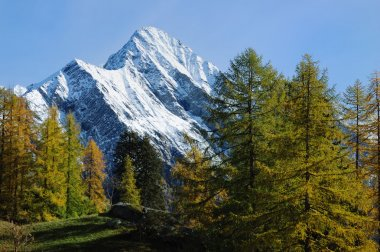 Mountain autumn scenic