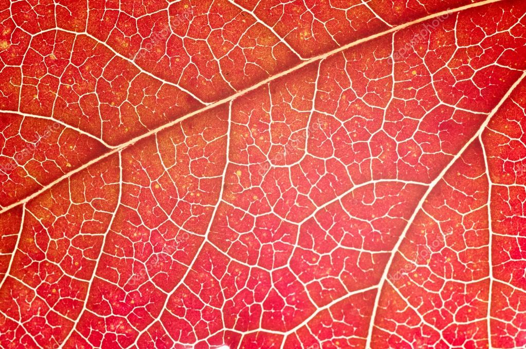 Bright leaf closeup view