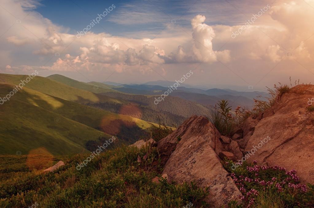 Thyme meadow in Carpathians
