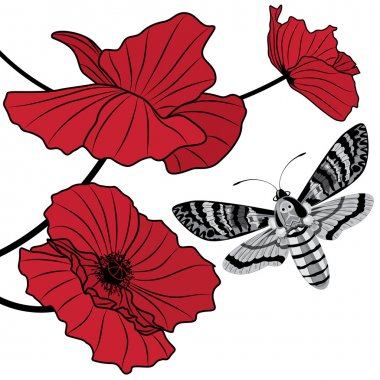 death's head hawk moth and red poppy
