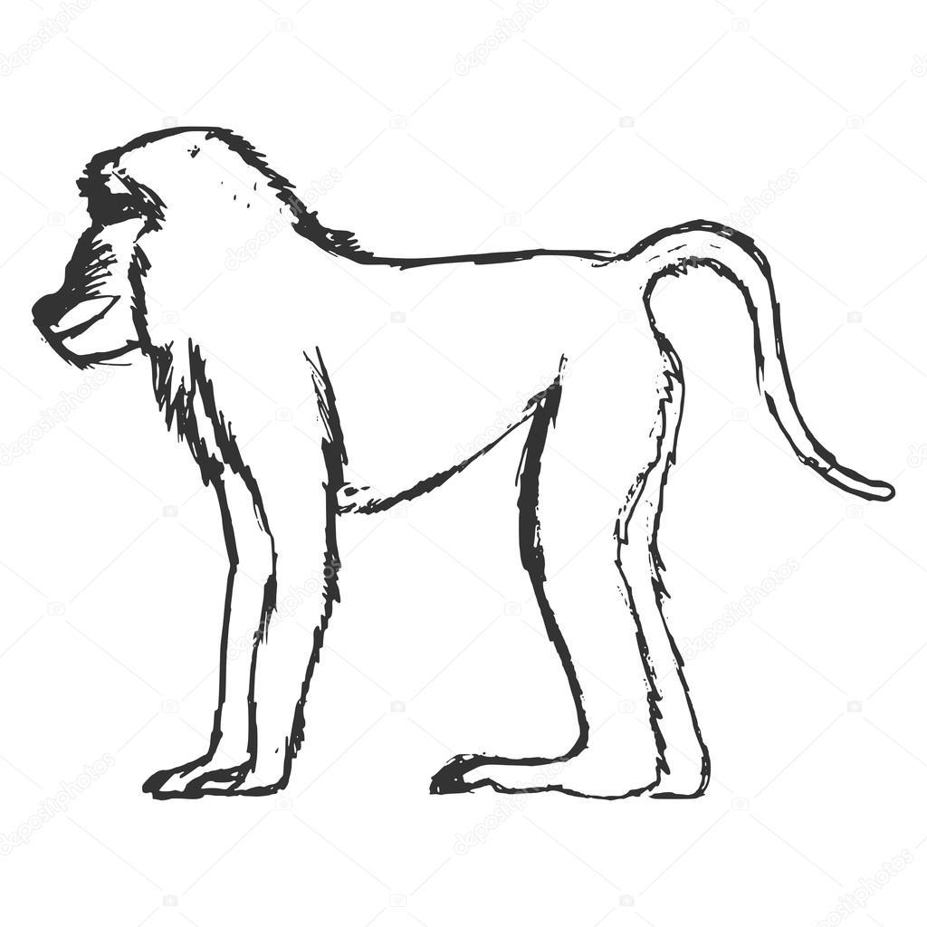 dibujado a mano, grunge, Ilustración de esbozo de babuino — Archivo ...