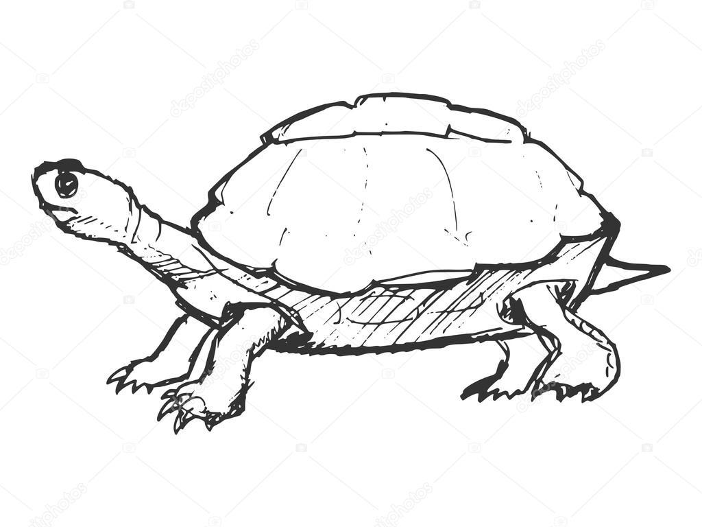 Elle çizilmiş Grunge Kaplumbağa Kroki çizimi Stok Vektör