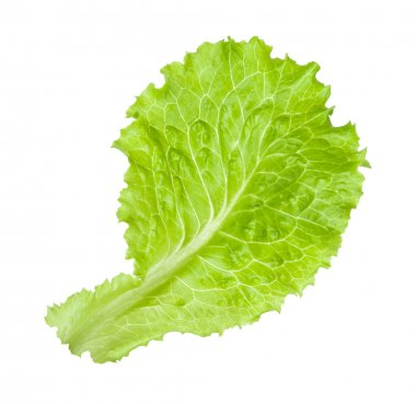Green salad leaf isolated on the white