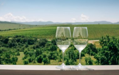 "Картина, постер, плакат, фотообои ""виноград, два бокала с белым вином на фоне виноградника"", артикул 506398292"
