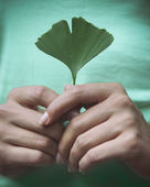 Woman holding Ginkgo biloba leaf in her hands