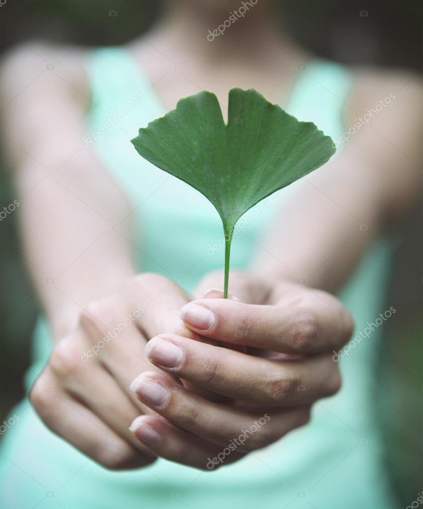 Woman holding Ginkgo biloba leaf in her hands