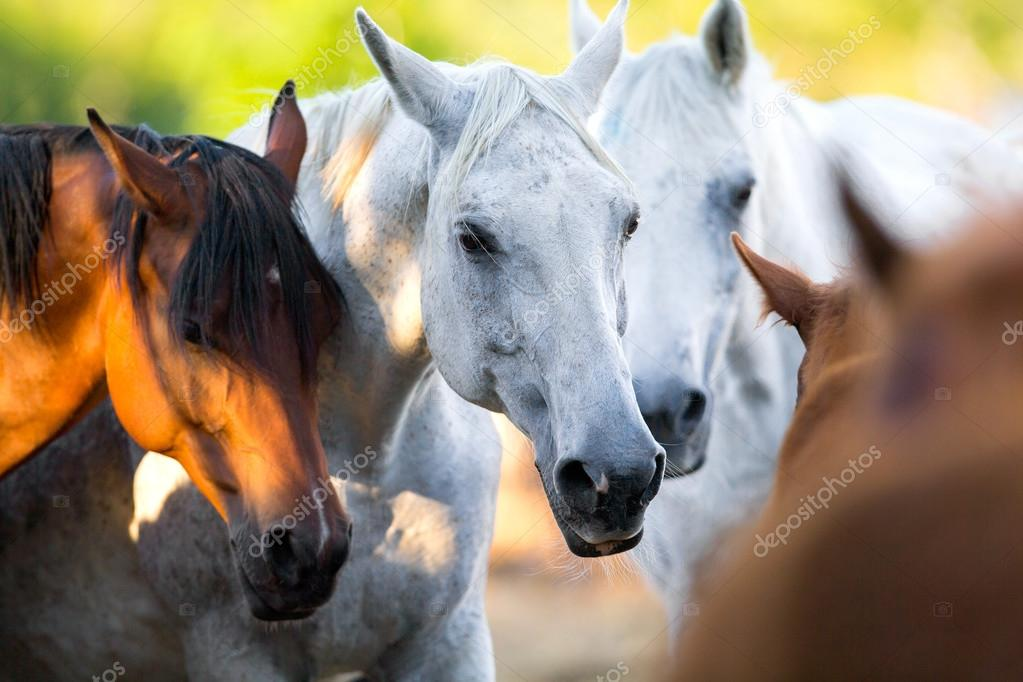 Group of horses standing together outdoor