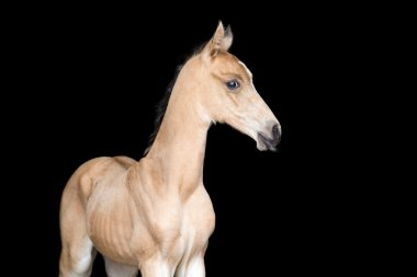 Small foal of a horse