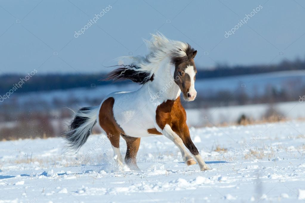 Small horse running in snowy field