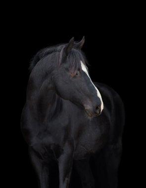 Black horse head