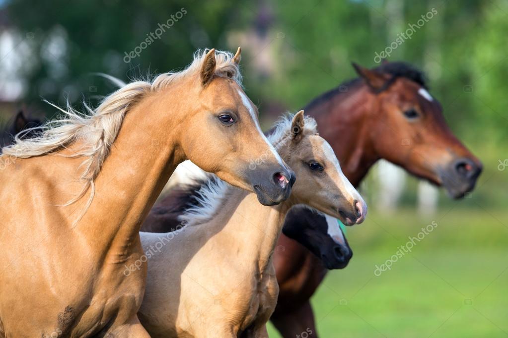 Horses running in field in summer