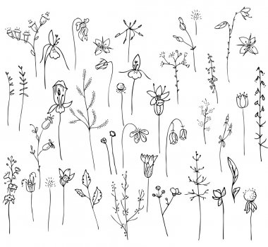 Collection with stylized forest flowers and herbs isolated on white.  Black and white silhouette. Objects for your design, announcements, greeting cards, posters, advertisement.