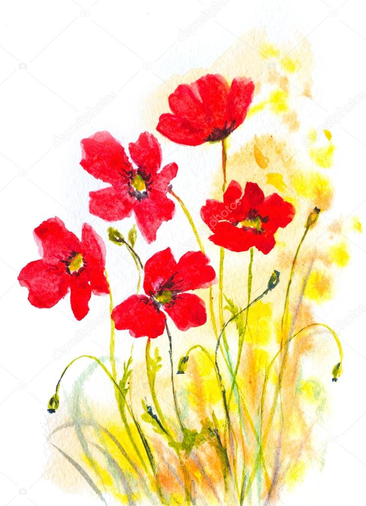 red poppies watercolor painting as natural decorative background