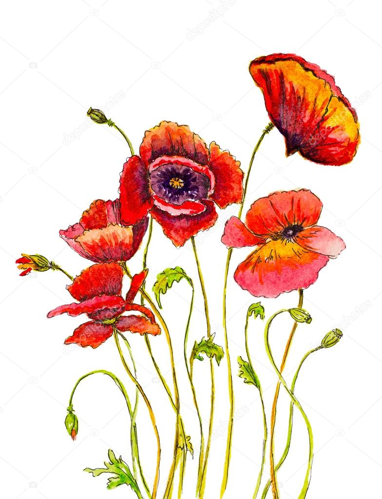 hand painted poppies with watercolor brush strokes and ink sketc