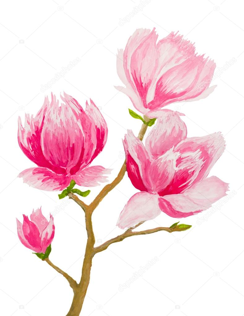 hand painted pink magnolia twig on white