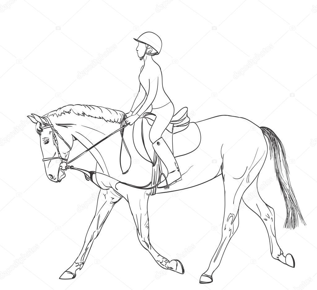 Horse Rider Line Art Drawing Equestrian Sport Training Theme Il Stock Vector C Ghenadie 122367248