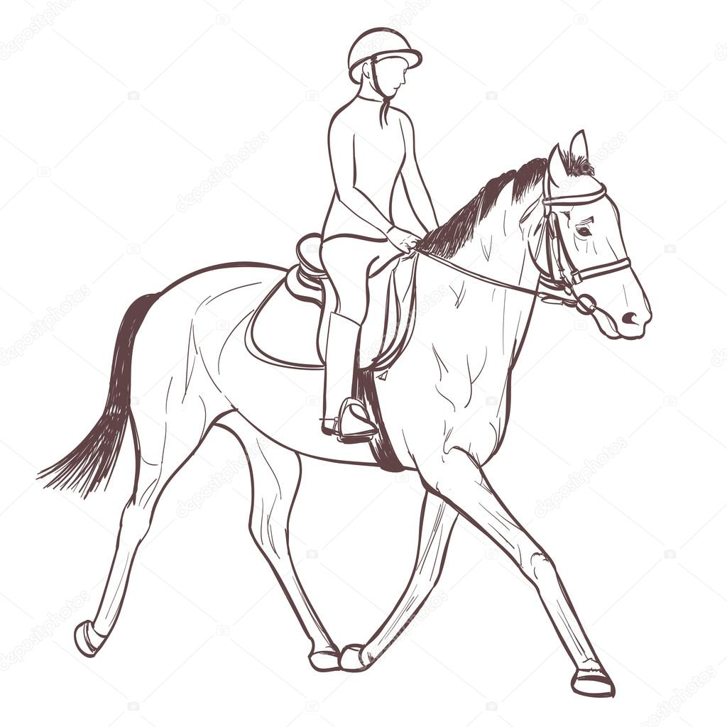 Horse Riding Drawing A Horse Rider Drawing Equestrian Sport Training Line Art Vector Stock Vector C Ghenadie 122367334