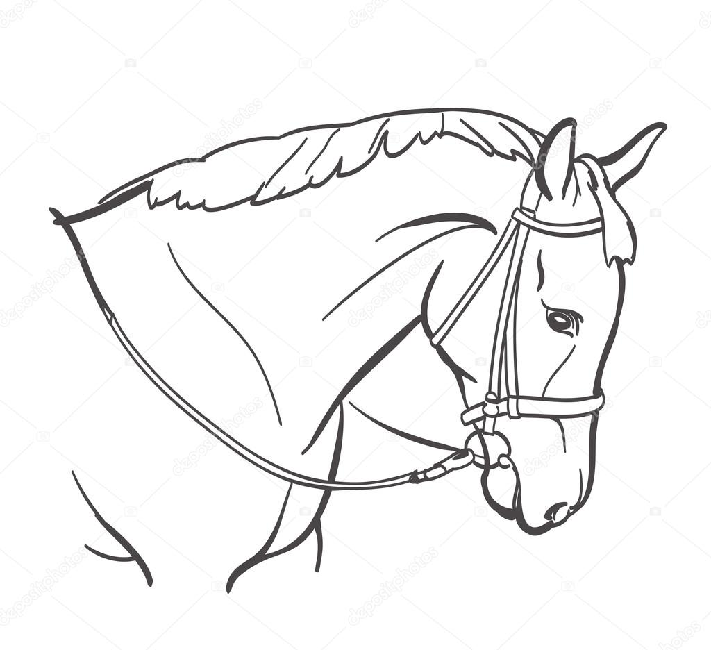 Horse Head Line Art Drawing Equestrian Training Theme Stock Vector C Ghenadie 122592392