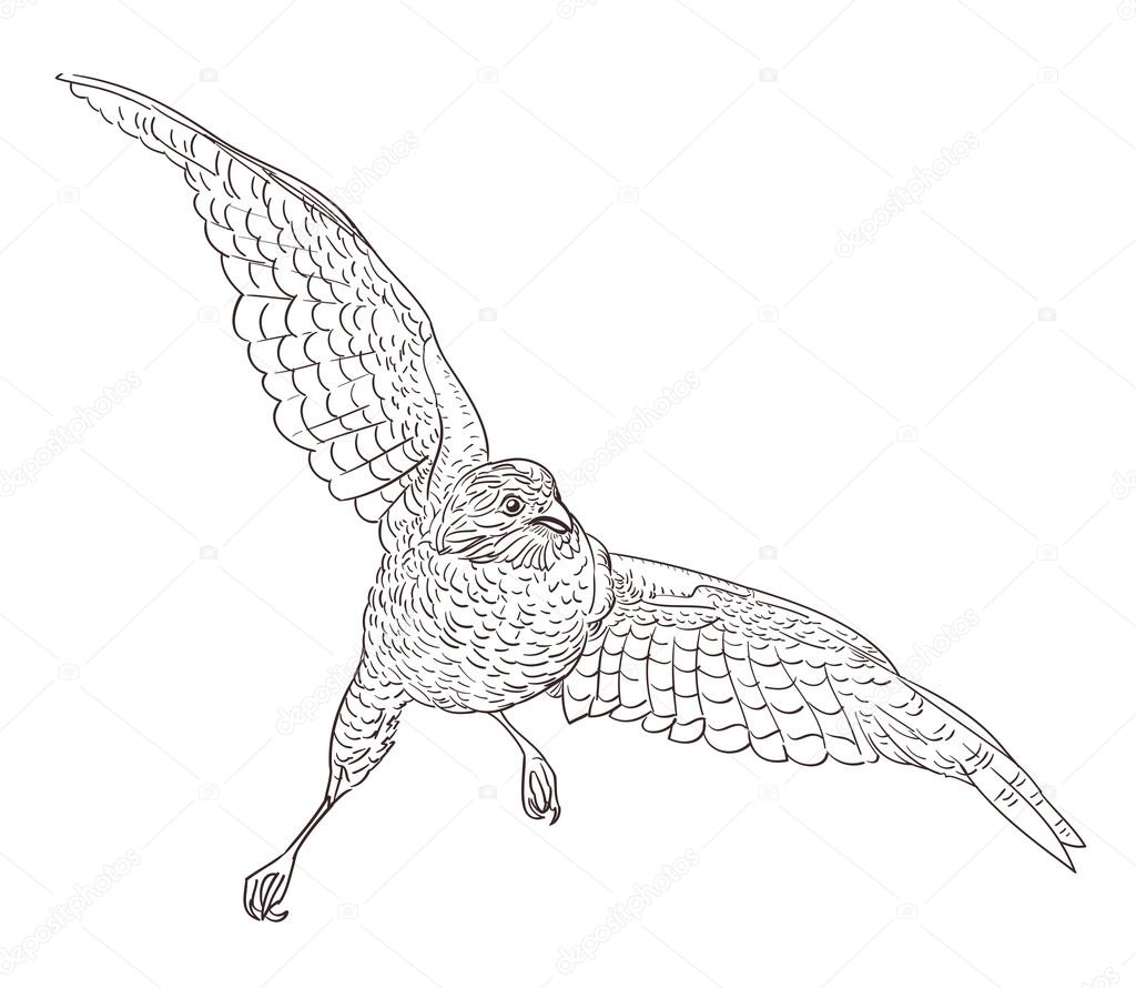 sketch drawing of flying falcon
