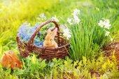 Fotografia due conigli rossi allaperto