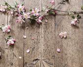 Apple květiny na dřevěné pozadí