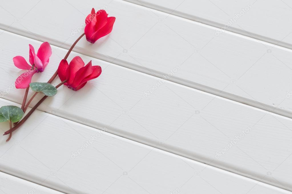 red cyclamen on wooden background